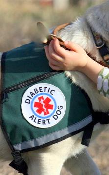 Diabetes Alert Dog vest