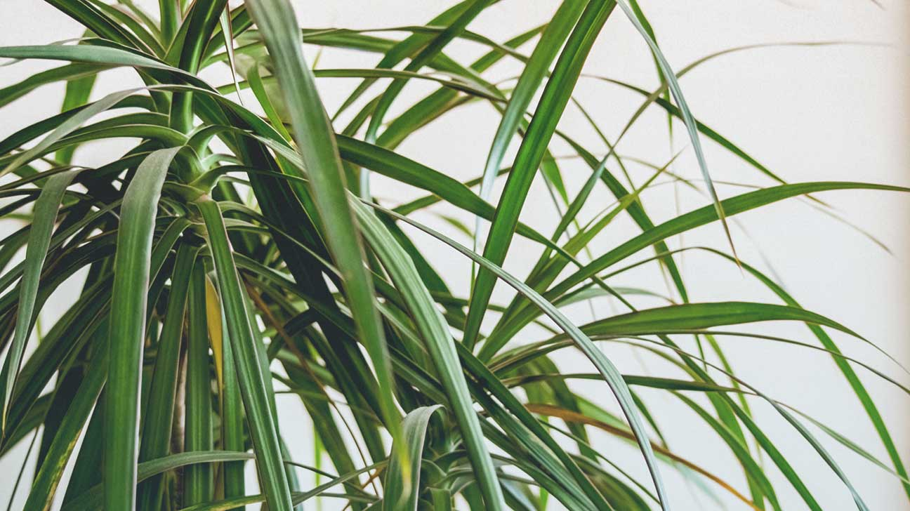 the best air-purifying plants