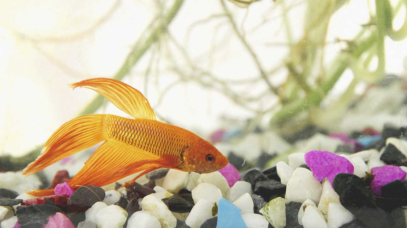 8 best pets for kids what type of pet is best for you for Best fish to have as pets