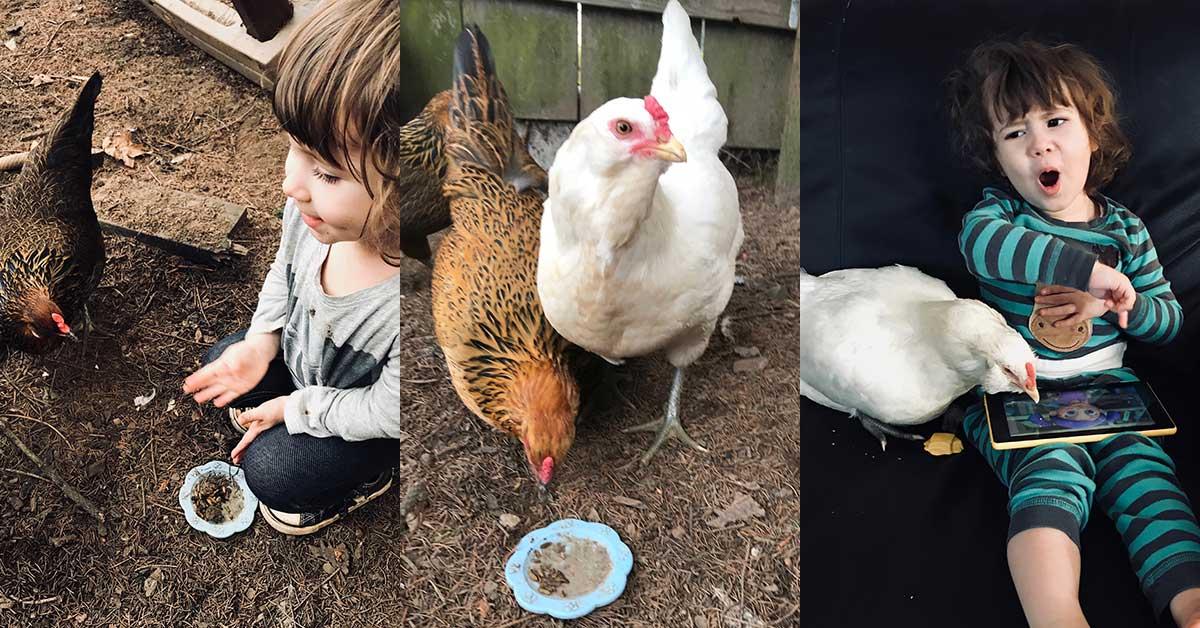 essay on hen for kids