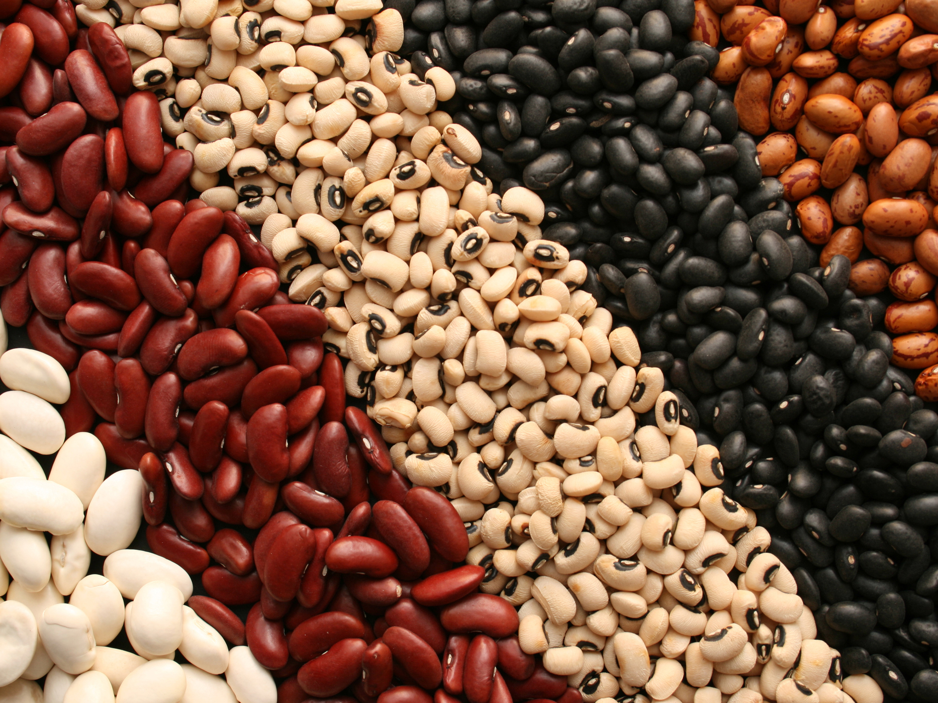 NEPC Trains Dried Beans Farmers On Export Guidelines