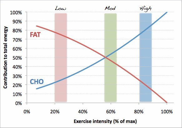 Low-Carb/Ketogenic Diets and Exercise Performance