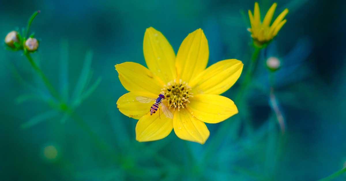 Top 11 Health Benefits of Bee Pollen