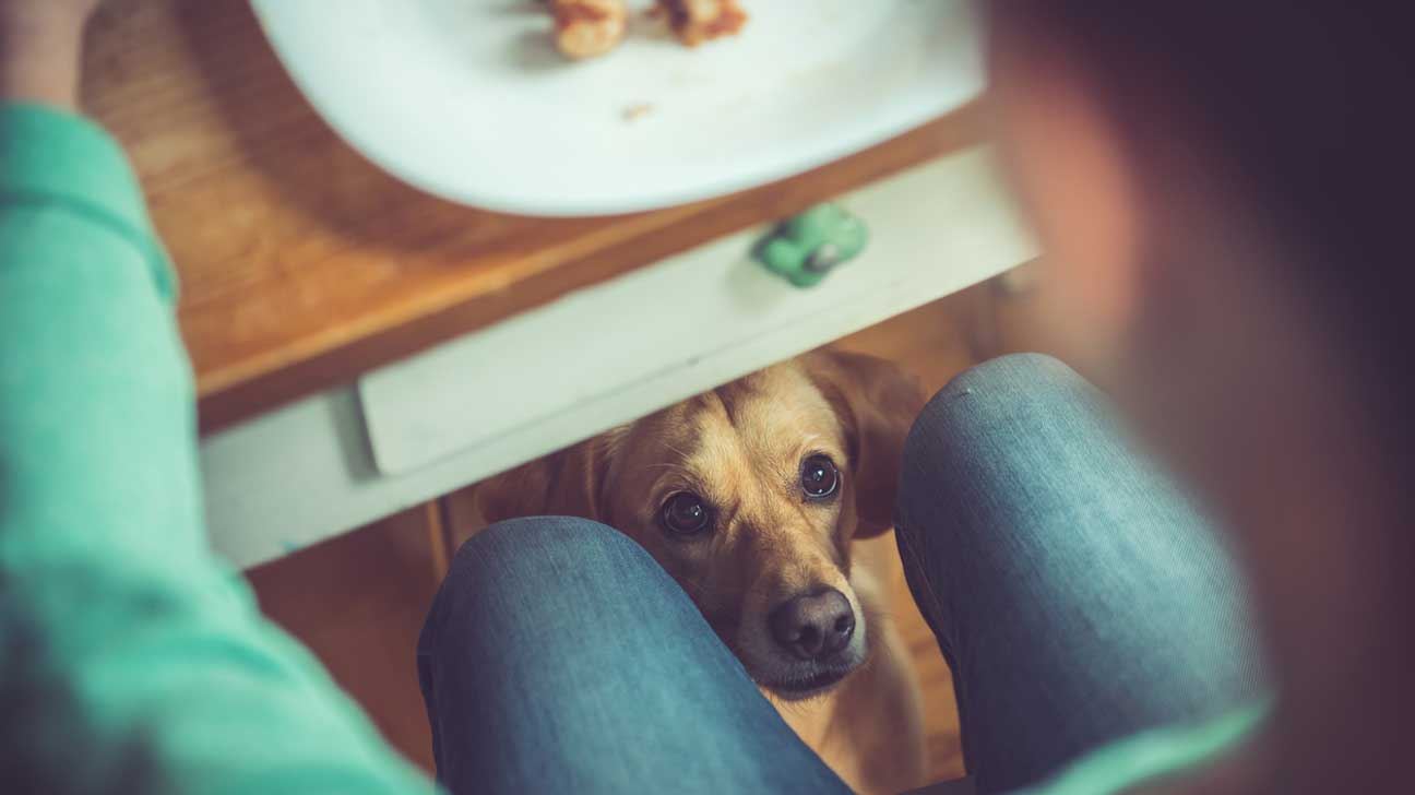 Dog Under Table Hoping for Some Food