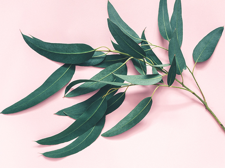 7 Impressive Benefits of Eucalyptus Leaves