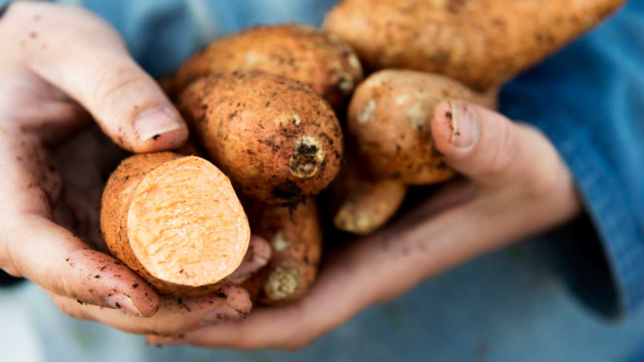 Hands Holding Sweet Potato