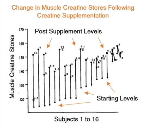 muscle creatine stores