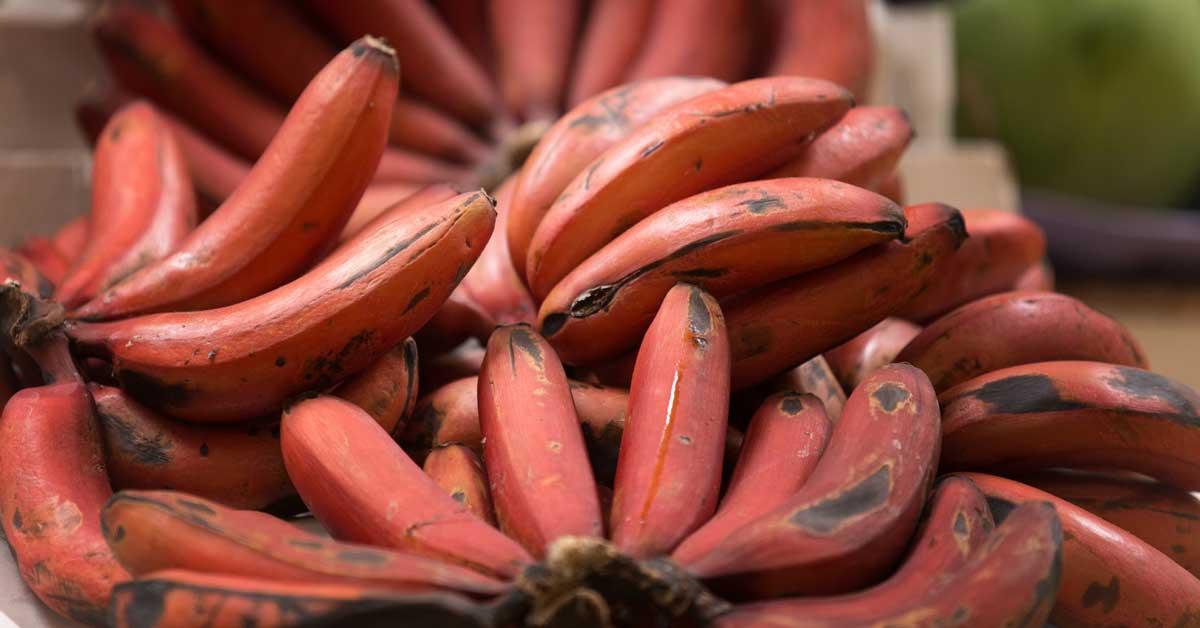 The Health Benefits of Bananas | HuffPost