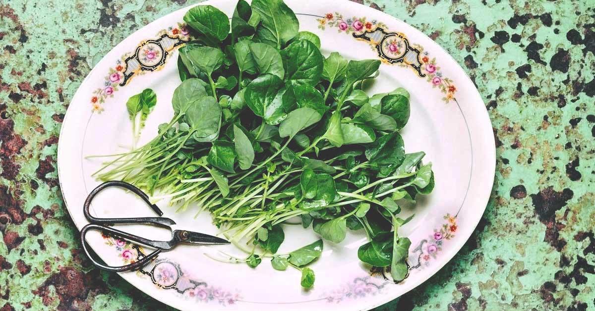 10 Impressive Health Benefits of Watercress