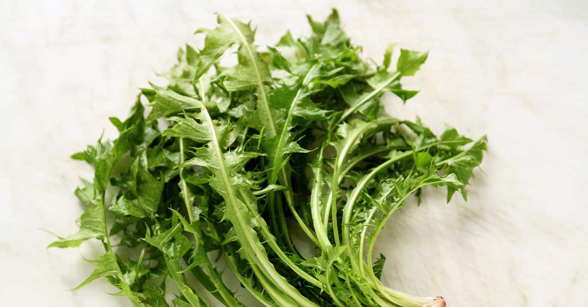 Wild Lettuce (Lactuca virosa): Pain Relief, Benefits and Risks1200 x 628 jpeg 65kB