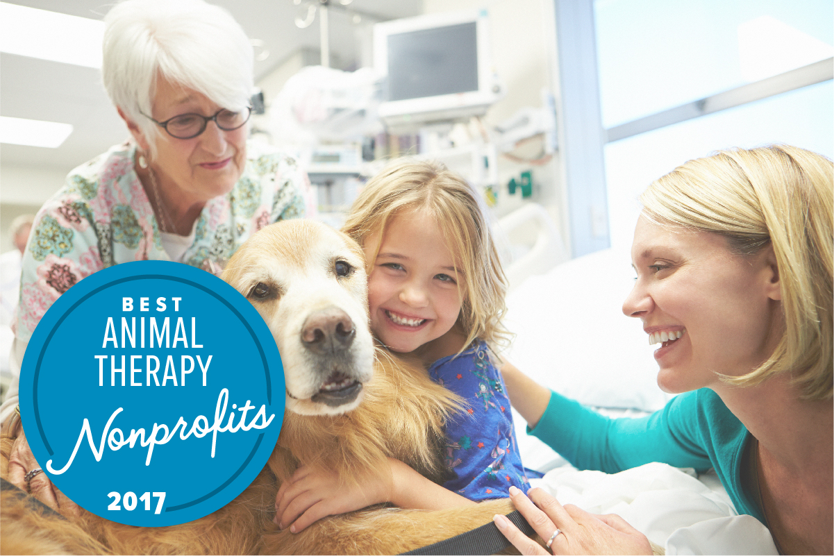 The Best Animal Therapy Nonprofits of the Year