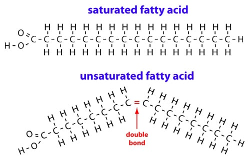 Foods High In Saturated Fat Include