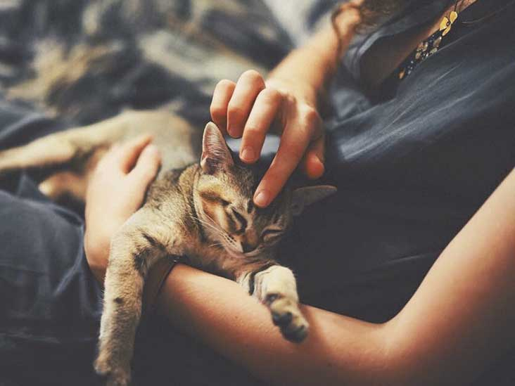 Cat Allergies: Symptoms and Treatment