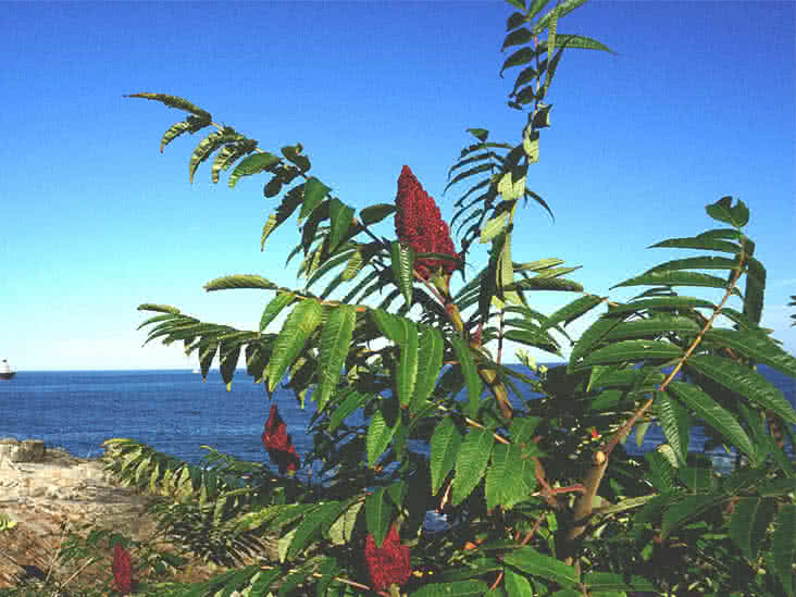 poison sumac rash pictures and treatment