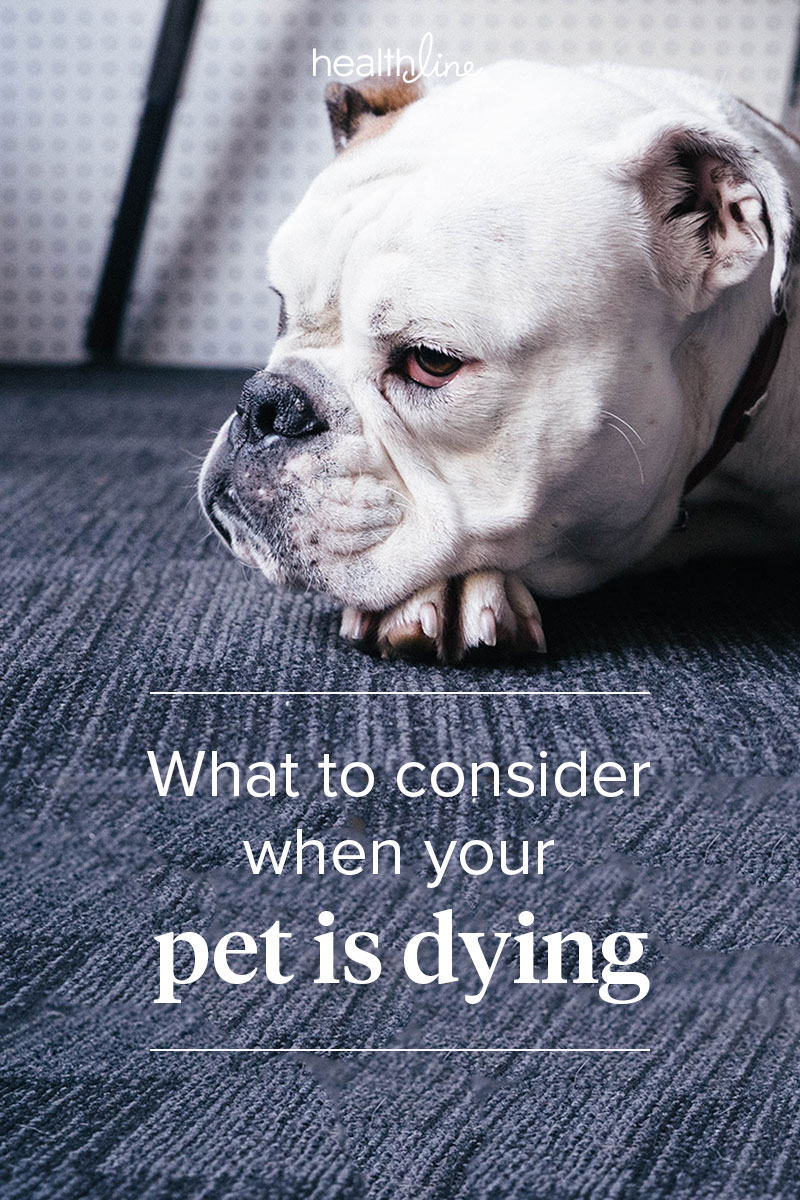 Sick Pet Alive Become Too Much