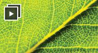Liquid Chlorophyll Benefits & Risks