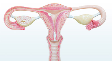 Uterus Transplant: Is It Ethical?
