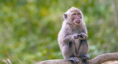 Antibodies Used to Eliminate HIV Hybrid in Monkeys