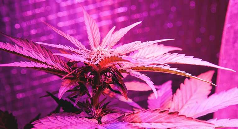 Epilepsie Cannabis