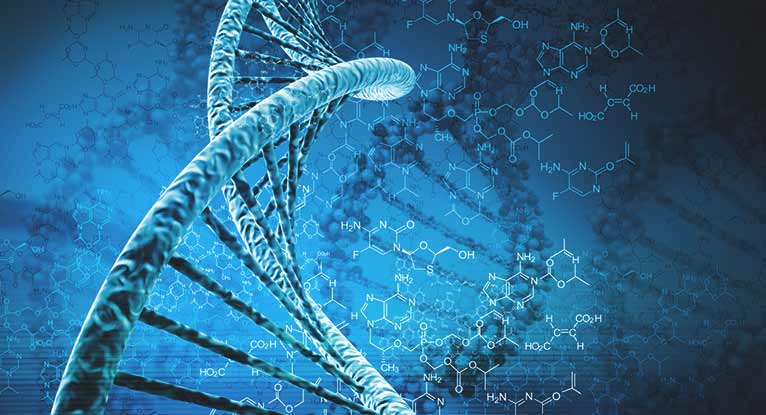 What Could a Synthetic Human Genome Be Used For?