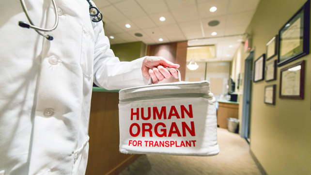 organ transplant carrier