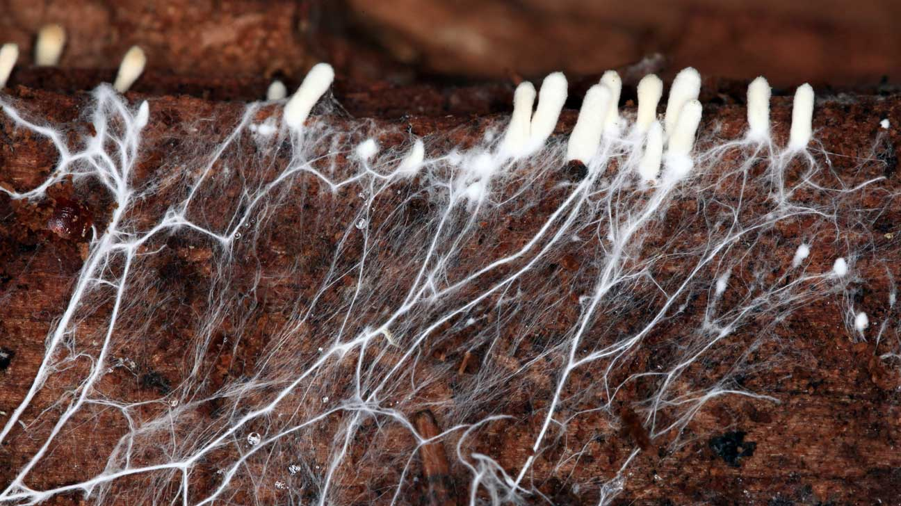 fungal infections lack of research and treatment
