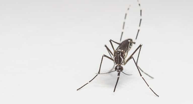 Mosquito S