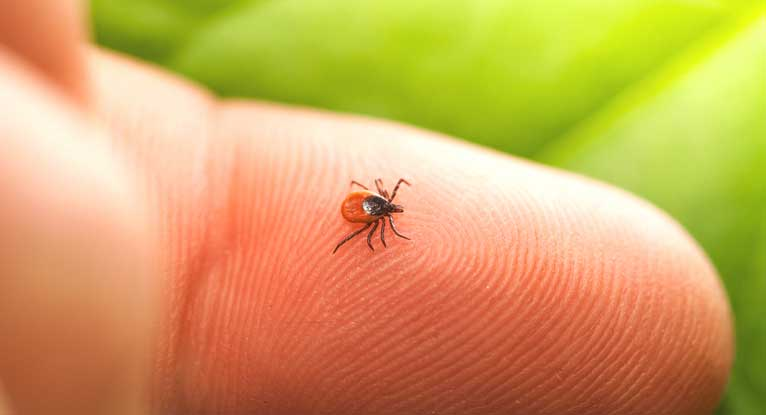 Lyme Disease Prevention 48 Hours After Tick Bite