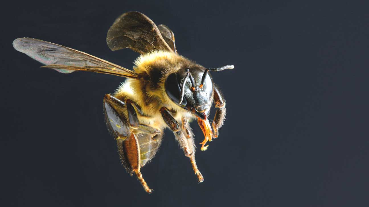 bee acupuncture