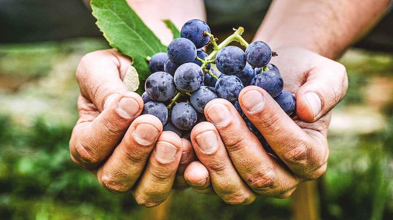 Diabetes And Resveratrol