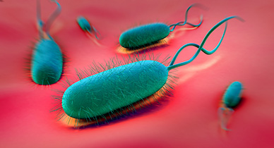 H Pylori Infection May Protect Women From Multiple Sclerosis