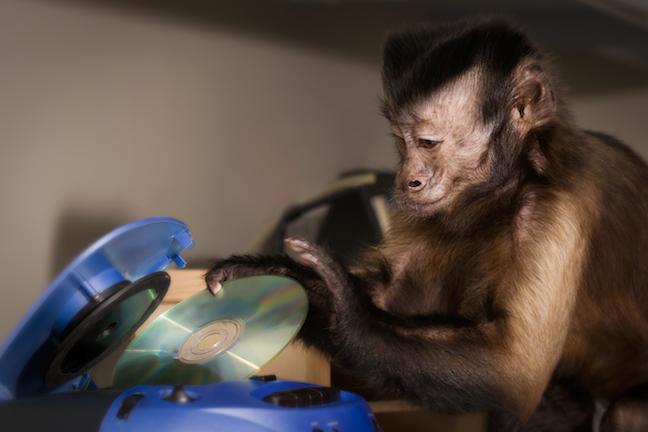 Monkey helper