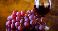 Resveratrol and MS