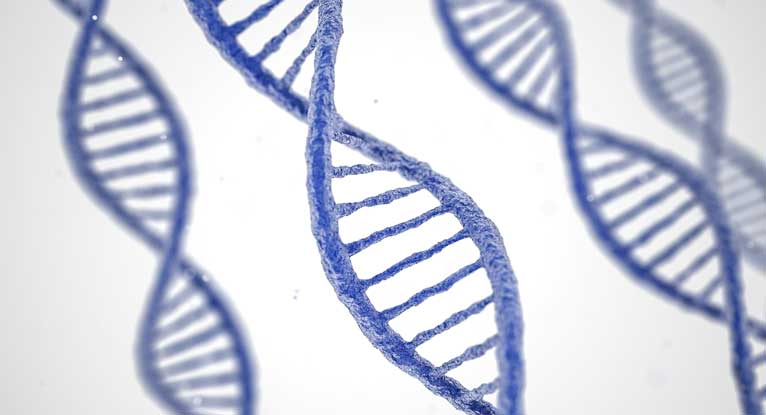Genetic Score May Help Predict Alzheimer's