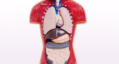 The organs in our body may age differently ccuart Gallery