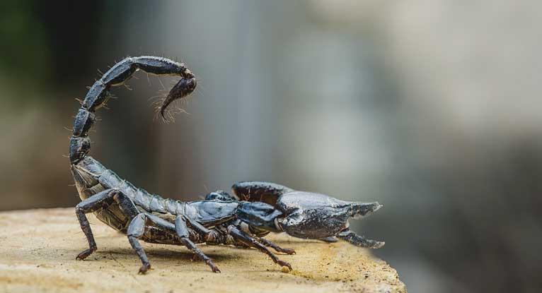 Surgeons Using Scorpion Venom to Illuminate Brain Tumors