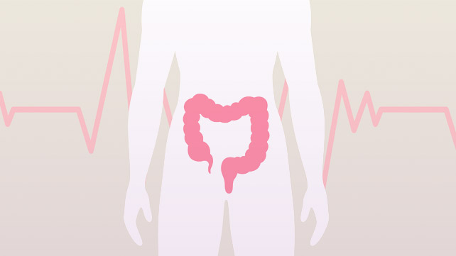 illustration of colon