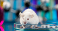 Drug Wipes Out Lung Cancer in Mice with Minimal Side Effects