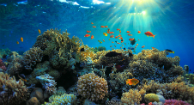 Coral Reefs Proteins Prevent Spread HIV