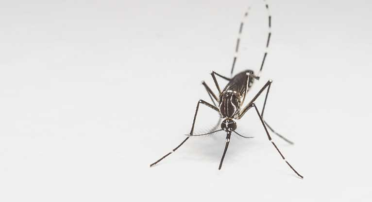 Mosquitoes May Be Able to Transfer Zika Virus to Eggs, Larvae