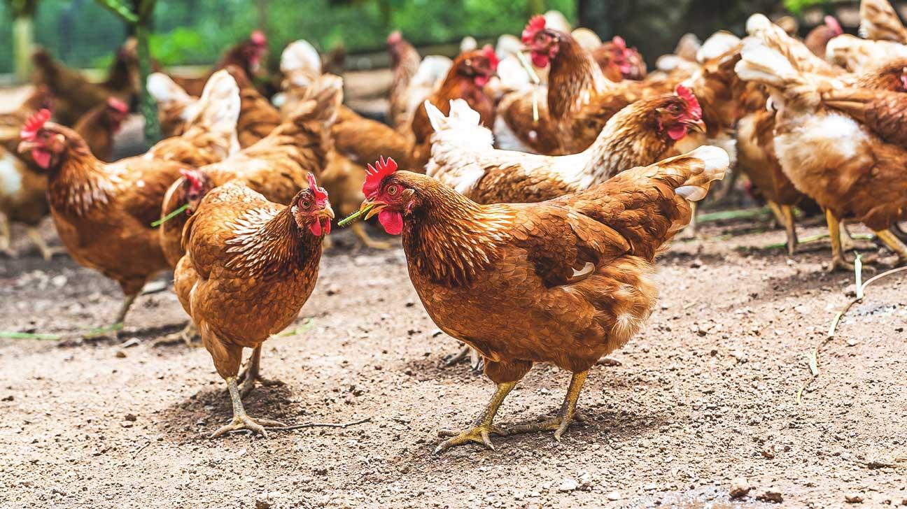 Breaking Down the Antibiotics in Meat at Big Restaurants