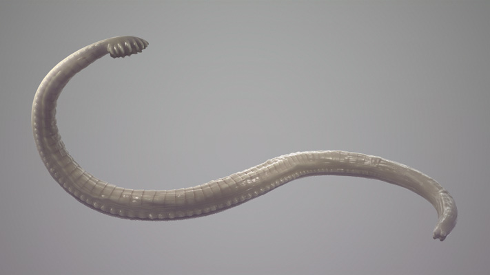 Parasites In Your Intestines May Actually Be Good For You