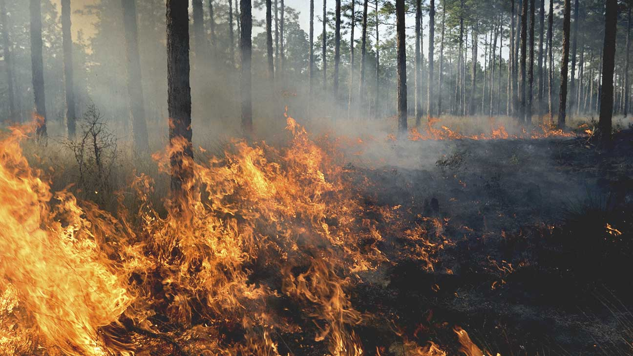 Forest Fire Smoke and Health Dangers
