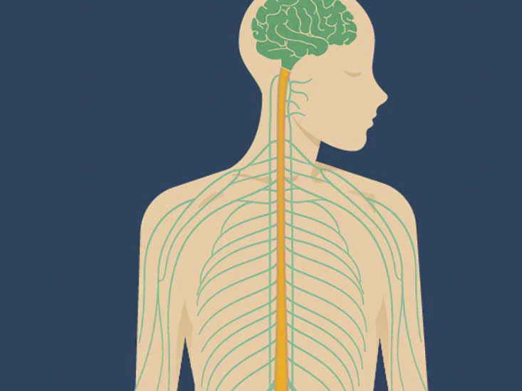 Vagus Nerve Anatomy And Function Diagram Stimulation Conditions