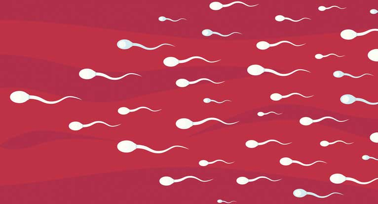 Sperm damaged by life experiences