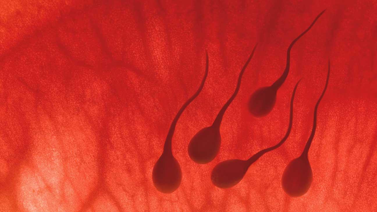 sperm radar