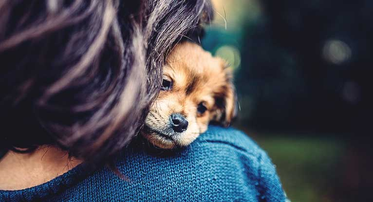 Why We Are So Emotionally Connected to Our Pets