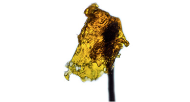 Rosin on a stick, home made rosin guide, Cannabis growers forum & community, How to grow cannabis, how to grow weed, a step by step guide to growing weed, cannabis growers forum, need help with sick plant, what's wrong with my cannabis plant, percys Grow Room, the Grow Room, percys Grow Guides, we'd growing forum, weed growers community, how to grow weed in coco, when is my cannabis plant ready for harvest, how to feed my cannabis plant, beginners guide to growing weed, how to grow weed for personal use, cannabis plant deficiency, how to germinate cannabis seeds, where to buy cannabis seeds, best weed growers website