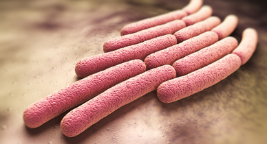 CDC Reports Drug Resistant Shigellosis Outbreak in the US