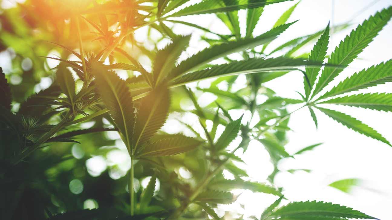 marijuana policy changes